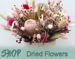 Shop For Dried Flowers